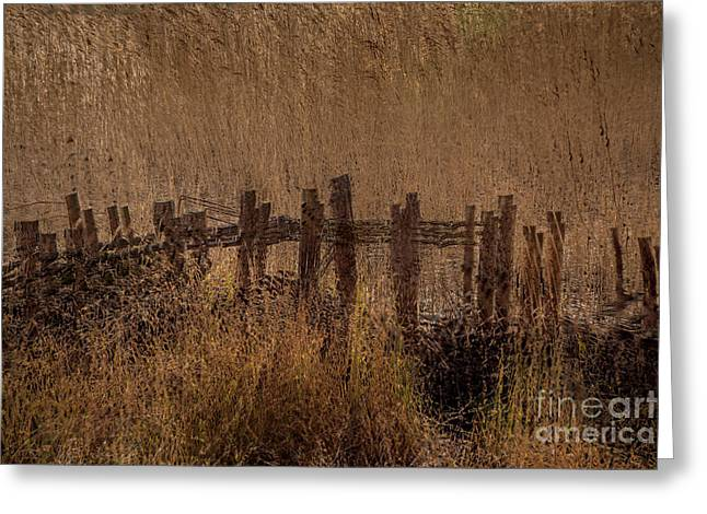 Reed Fence Greeting Card by Richard Thomas