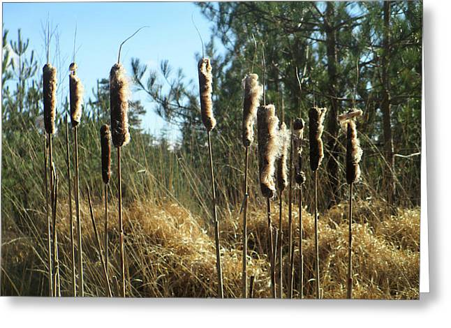 Reeds In The Wind Greeting Card by The Rambler