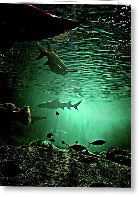 Reef Fish Photographs Greeting Cards - Reef Activity Greeting Card by Douglas Barnard