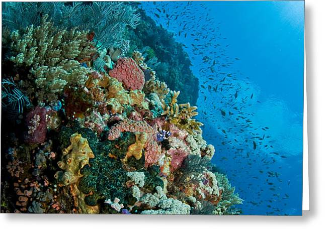 Reef Scene With Corals And Fish Greeting Card by Mathieu Meur