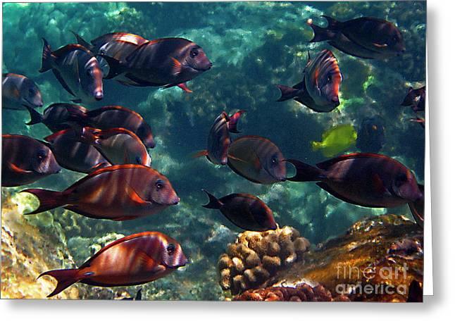 Reef Fish Greeting Cards - Reef School Greeting Card by Bette Phelan
