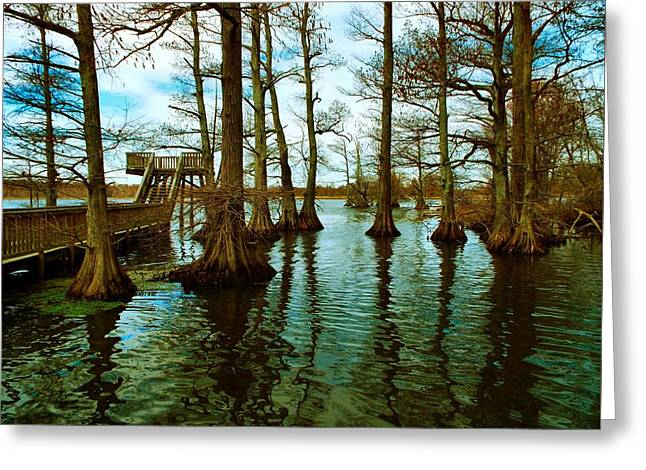 Reelfoot Beauty Greeting Card by Julie Dant