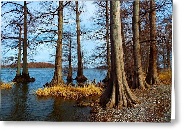 Reelfoot In Winter Greeting Card by Julie Dant