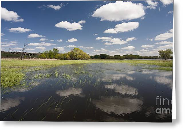 Reflecting Water Greeting Cards - Reflecting Clouds - Jim River Valley Greeting Card by Patrick Ziegler