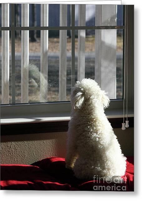 Doggies Photographs Greeting Cards - Reflecting Dog Daze Greeting Card by Joy Tudor