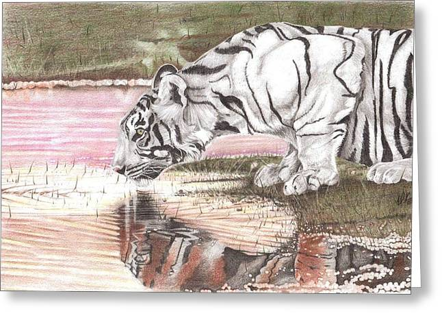 Reflecting Water Drawings Greeting Cards - Reflecting Greeting Card by Dustin Knighton