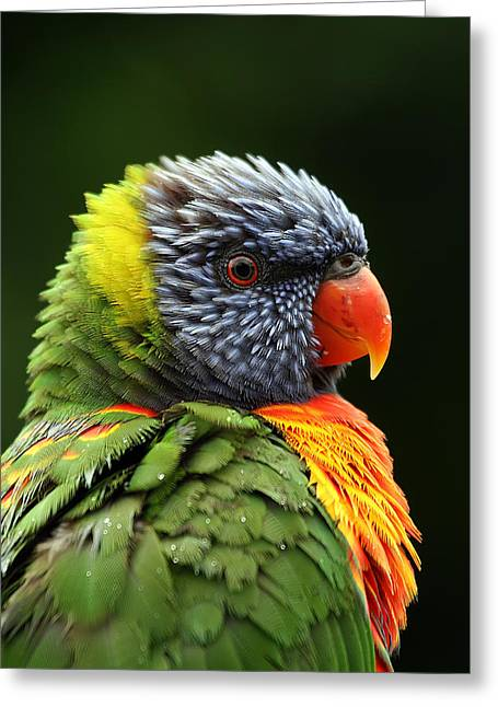 Bird Photography Greeting Cards - Reflecting in the Rain Greeting Card by Lesley Smitheringale