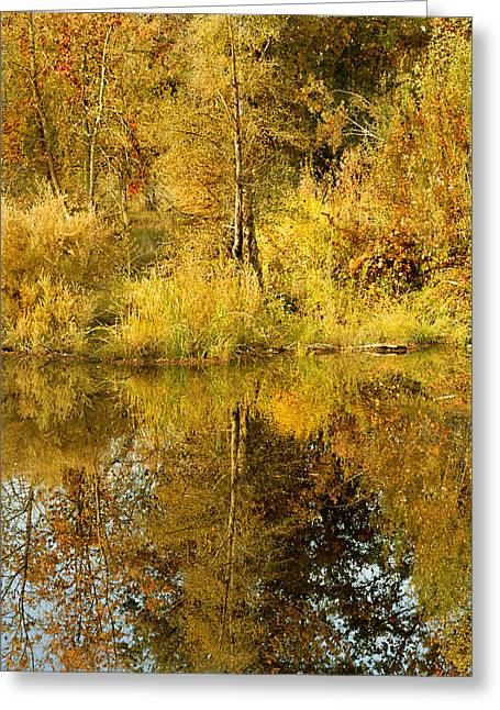 Reflecting On Autumn Leaves Greeting Card by Pamela Patch