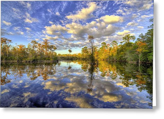 Reflecting On Florida Wetlands Greeting Card by JC Findley