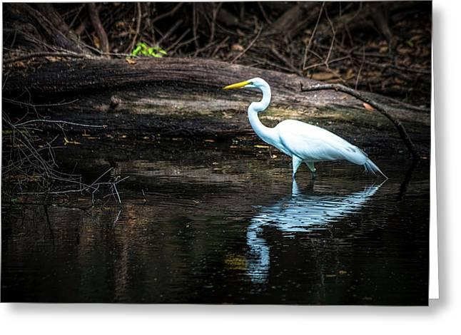 Reflecting White Greeting Card by Marvin Spates