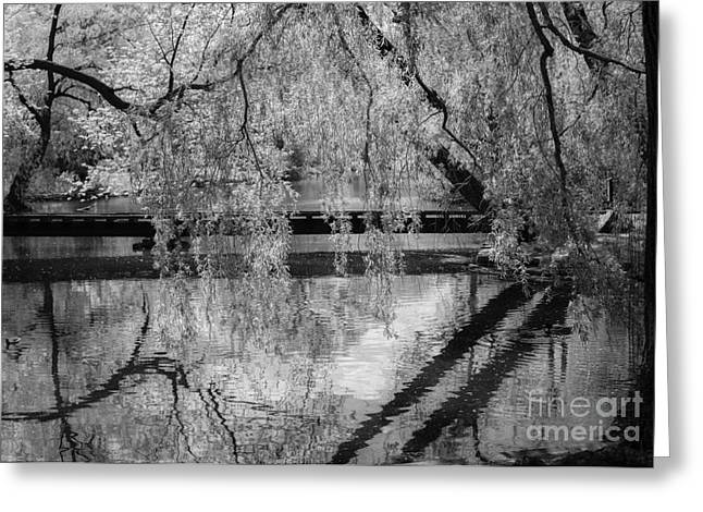Forest Pyrography Greeting Cards - Reflection BW Greeting Card by Olga Photography