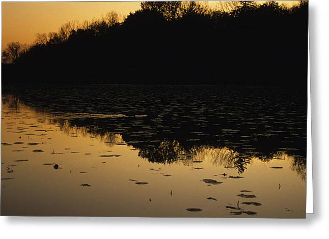Reflection In The Water At Everglades Greeting Card by Stacy Gold