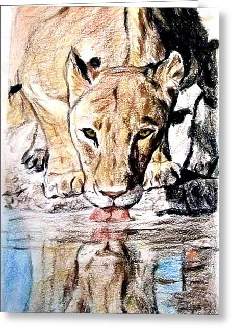 Wild Life Drawings Greeting Cards - Reflection of a Lioness Drinking from a Watering Hole Greeting Card by Jim Fitzpatrick