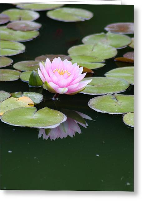 Waterlily Stamen Greeting Cards - Reflection Of Beauty Greeting Card by Christiane Schulze Art And Photography