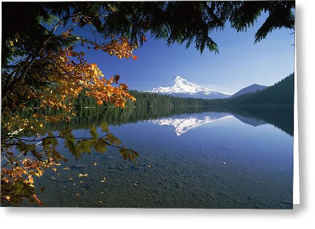 Mt Hood Greeting Cards - Reflection Of Mountain And Trees Greeting Card by Panoramic Images