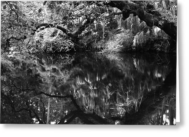 Best Sellers -  - Trees Reflecting In Water Greeting Cards - Reflection on Hillsborough River in BW Greeting Card by Gregory Colvin