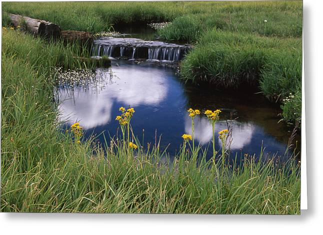 Reflections - Casa Vieja Meadows Greeting Card by Soli Deo Gloria Wilderness And Wildlife Photography