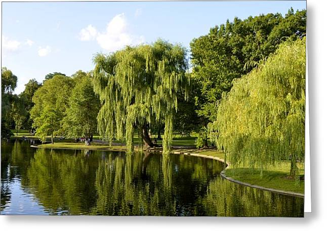Reflections Greeting Card by Corinne Rhode