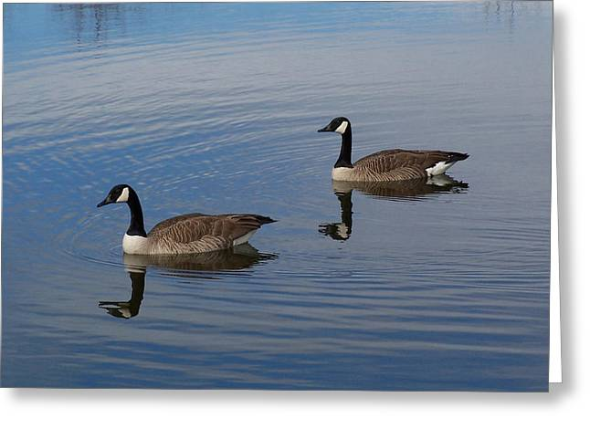 Geese Greeting Cards - Reflections Greeting Card by Ernie Echols