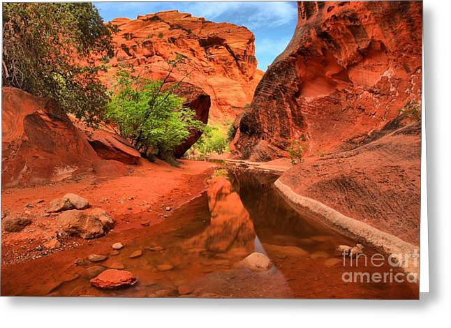Southern Utah Greeting Cards - Reflections In Quail Creek Greeting Card by Adam Jewell