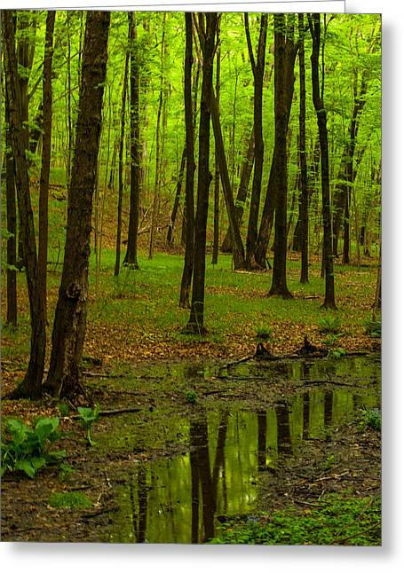 Reflecting Water Greeting Cards - Reflections In The Woods Greeting Card by Karol  Livote