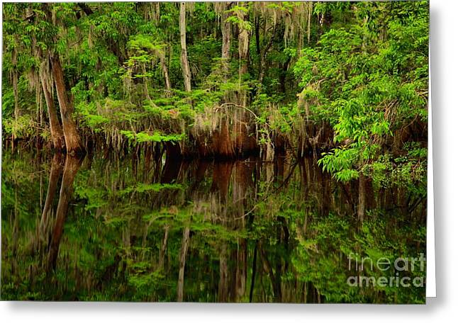 Manatee Springs Greeting Cards - Reflections Near The Suwannee River Greeting Card by Adam Jewell