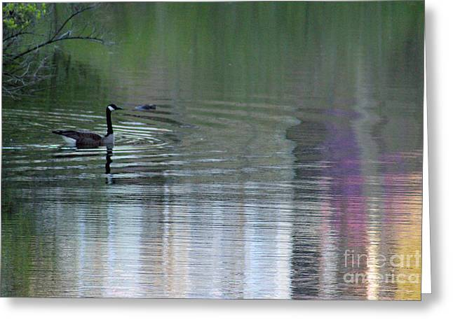 Woodland Scenes Greeting Cards - Reflections of a Canada Goose Greeting Card by Karen Adams