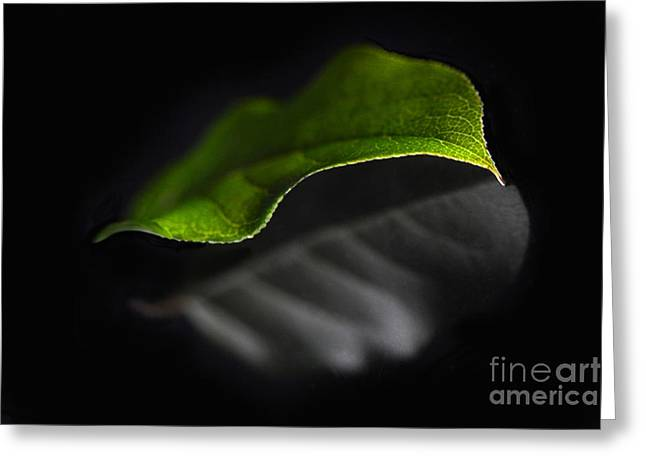 Leaves Photographs Greeting Cards - Reflections Of A Leaf Greeting Card by Dan Holm