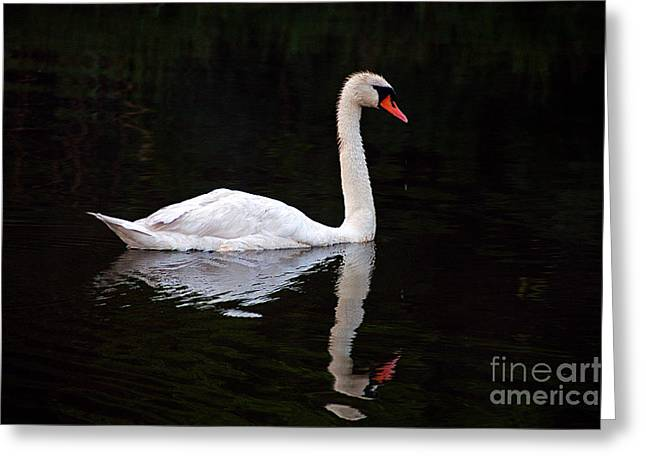 Reflections Of A Swimming Swan Greeting Card by Clayton Bruster