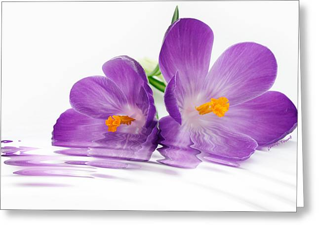 Reflections of Beauty Greeting Card by Cheryl Young