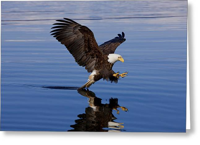 Reflections of Eagle Greeting Card by John Hyde - Printscapes