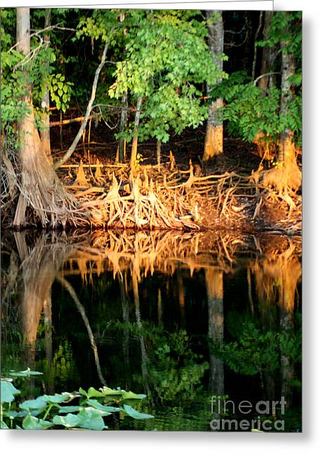 Tree Roots Greeting Cards - Reflections of Our Roots Greeting Card by Lora Wood