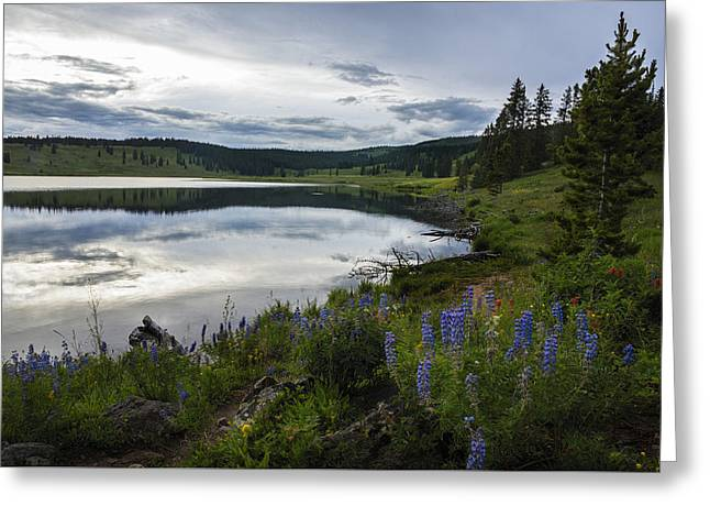 Lake Walden Greeting Cards - Dumont Lake Reflections Greeting Card by Dave Dilli