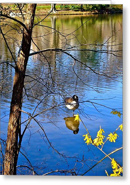 Felix Zapata Greeting Cards - Reflections of Spring Greeting Card by Felix Zapata