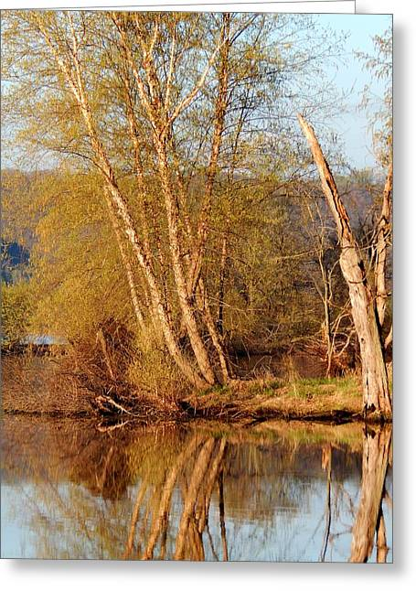 Wildlife Refuge. Greeting Cards - Reflections of Spring Greeting Card by Wild Thing