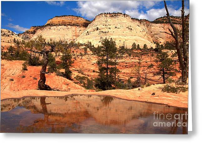 White Sandstone Greeting Cards - Reflections Of The East Zion Back Country Greeting Card by Adam Jewell