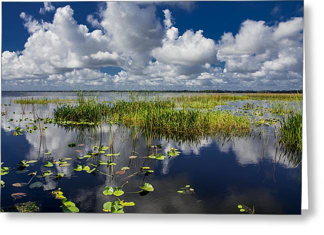 Aquatic Greeting Cards - Reflections on the lake Greeting Card by Zina Stromberg