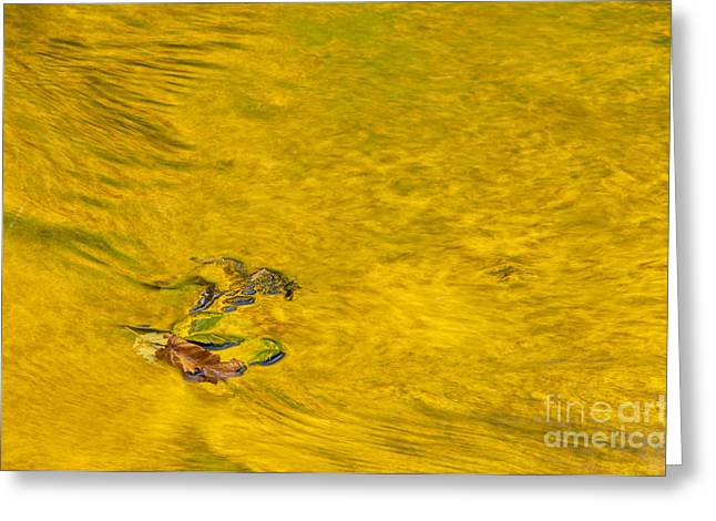 Golden Trout Greeting Cards - Reflections on Trout Creek Greeting Card by Greg Vaughn - Printscapes