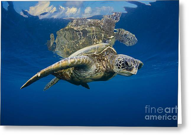Animal Wisdom Greeting Cards - Reflective Turtle 1 Greeting Card by Dave Fleetham - Printscapes