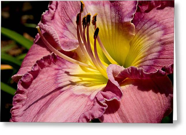 Beach Photography Greeting Cards - Regal Flower Greeting Card by Brian Hamilton