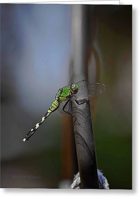 Green Darner Dragonflies Greeting Cards - Regal Shadows Greeting Card by DigiArt Diaries by Vicky B Fuller