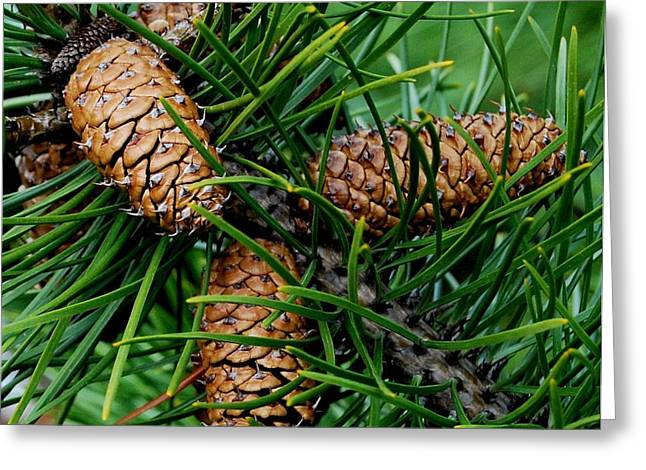 Pine Cones Greeting Cards - Relationships Greeting Card by Marilynne Bull