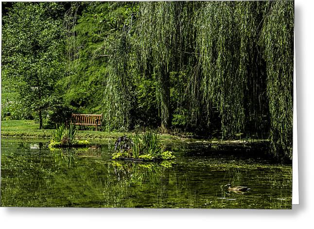 Weeping Greeting Cards - Relax by Pond Greeting Card by Allen Nice-Webb