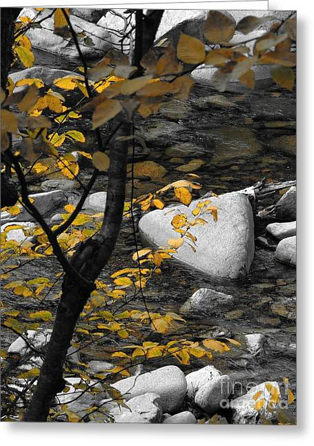 Wolf Creek Greeting Cards - Relaxing By A Babbling Brook Greeting Card by Marcia Lee Jones