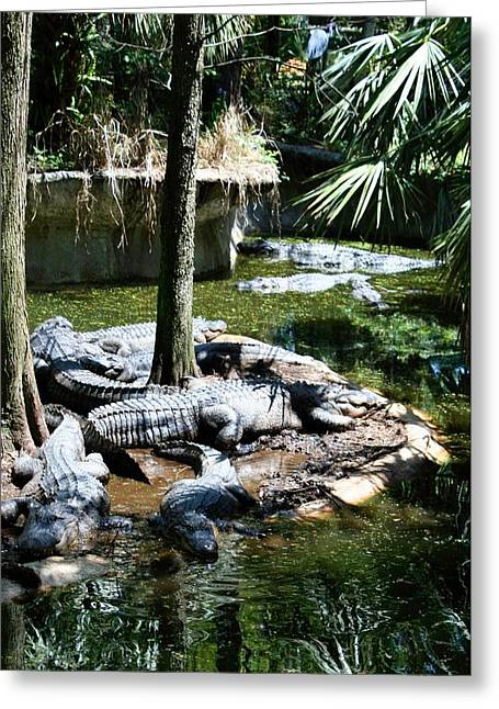 Florida Gators Greeting Cards - Relaxing in the Swimming Hole Greeting Card by Sheryl Unwin