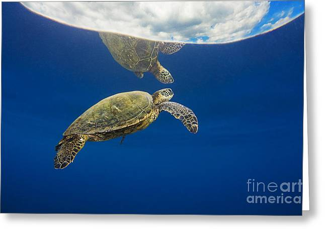 Animal Wisdom Greeting Cards - Relfective Turtle 2 Greeting Card by Dave Fleetham - Printscapes