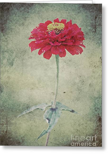 Asters Mixed Media Greeting Cards - Remeber me Greeting Card by Angela Doelling AD DESIGN Photo and PhotoArt