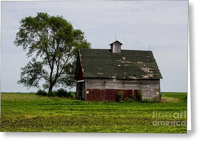 Barn Yard Greeting Cards - Remember When Greeting Card by Doug Daniels