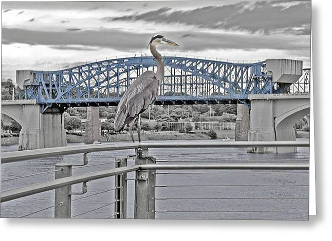 Tennessee River Greeting Cards - Blue Heron Blue Bridge Greeting Card by Jeannee C Gannuch