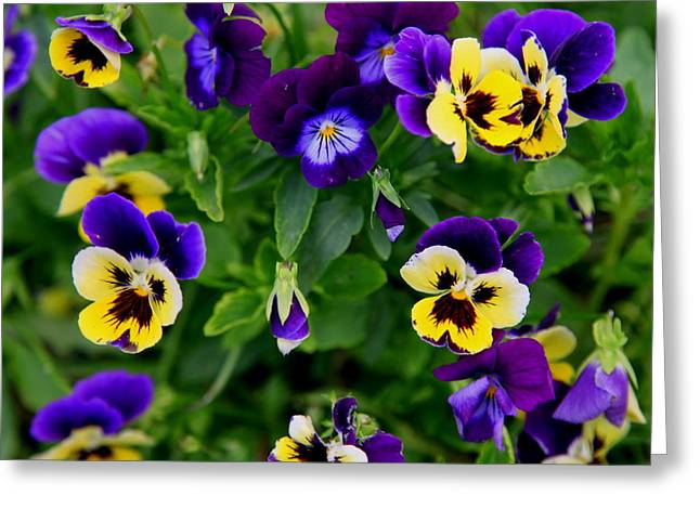 Wild Pansy Greeting Cards - Remembering Grandma Greeting Card by Karen Wiles